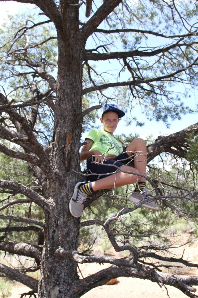 De jongens klommen liever in de bomen bij Yavapoint