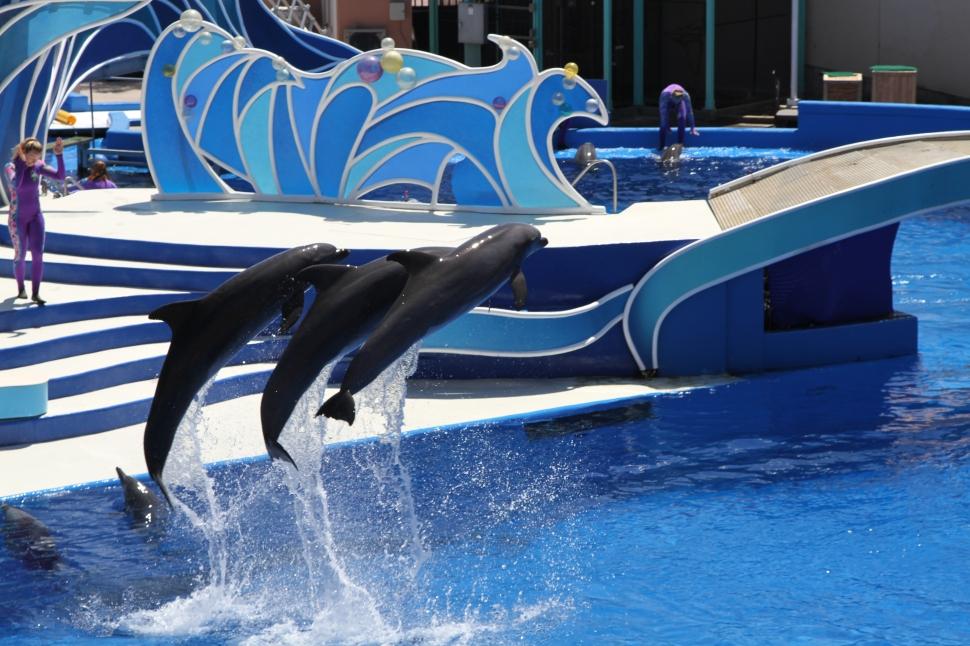 De dolfijnen